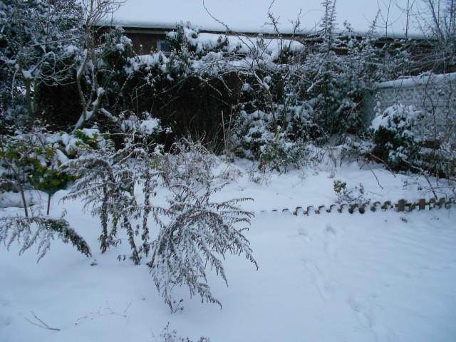 DSCN4433 P2 in snow Jan 2013
