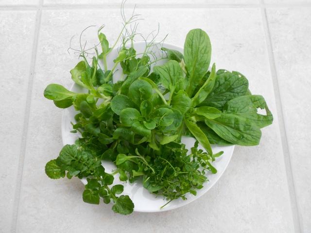 DSCN4436 salads 280113