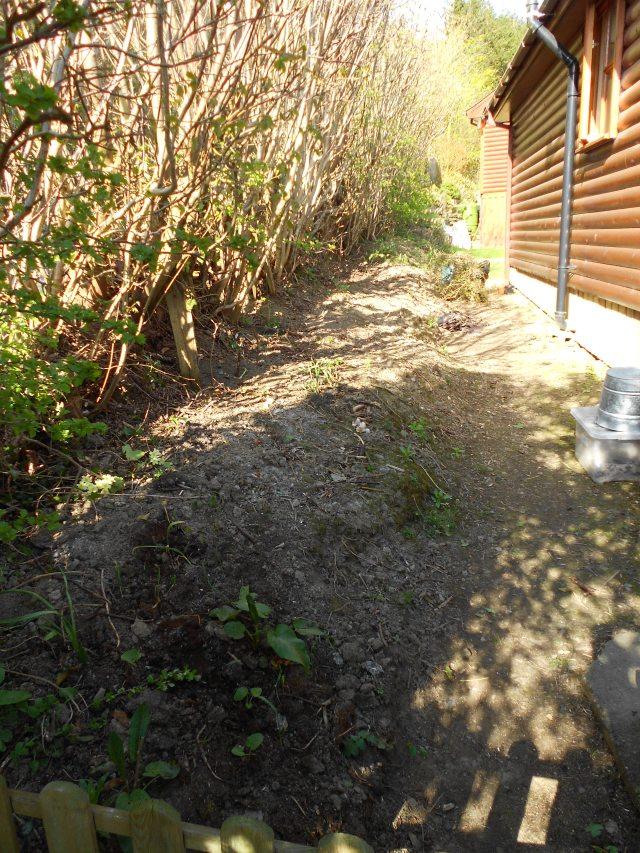 DSCN4692 back hedge
