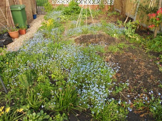 DSCN4841 garden on 130513
