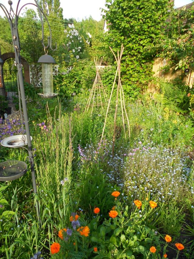 DSCN5081 side garden 170613