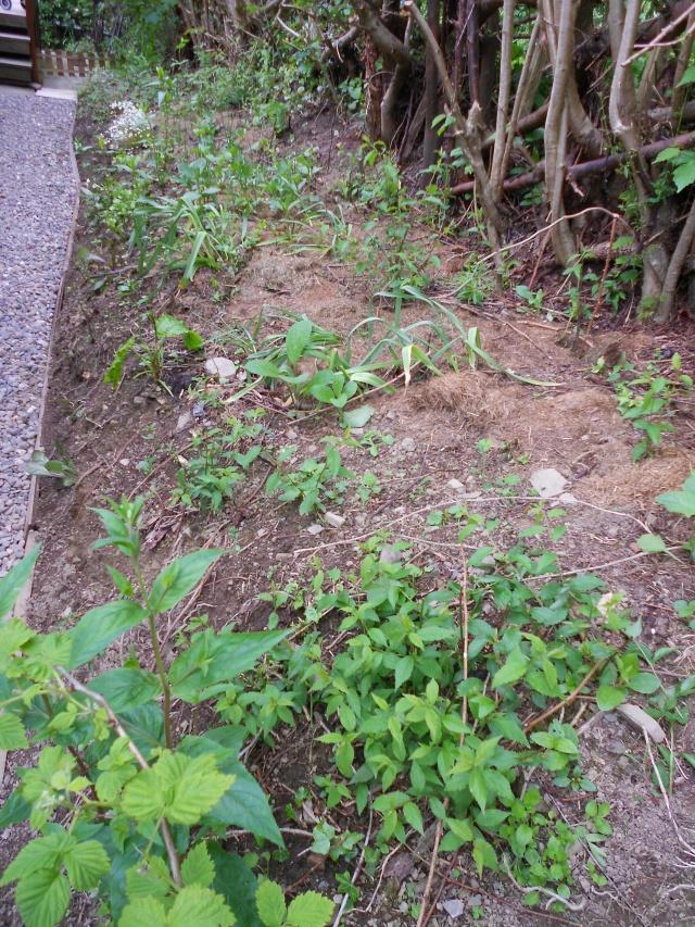 DSCN5040 hedgetables 170613