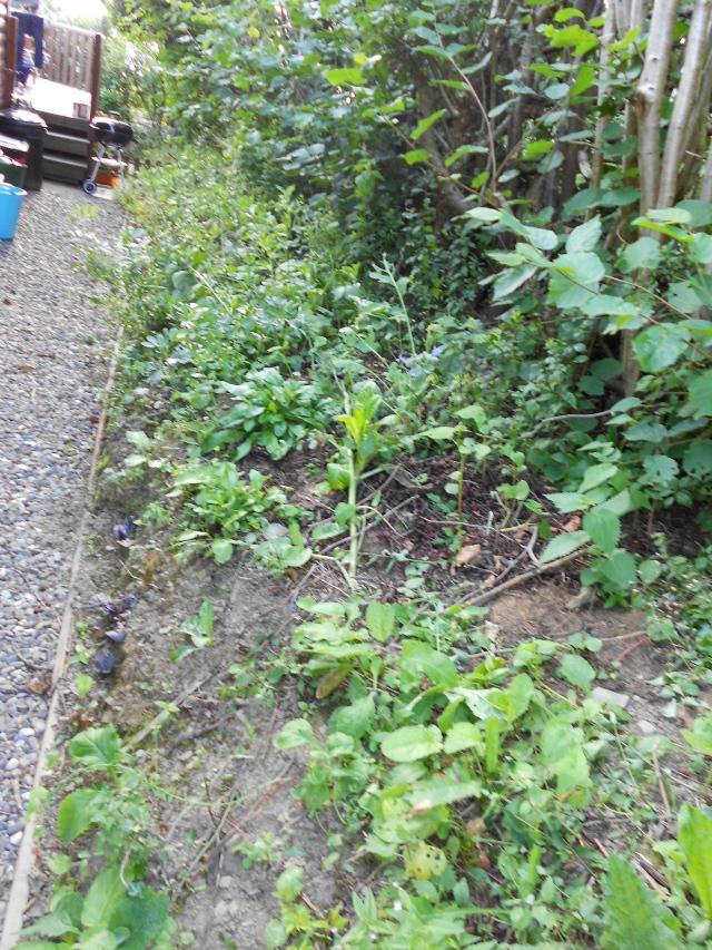 DSCN5466 hedgetables 270813