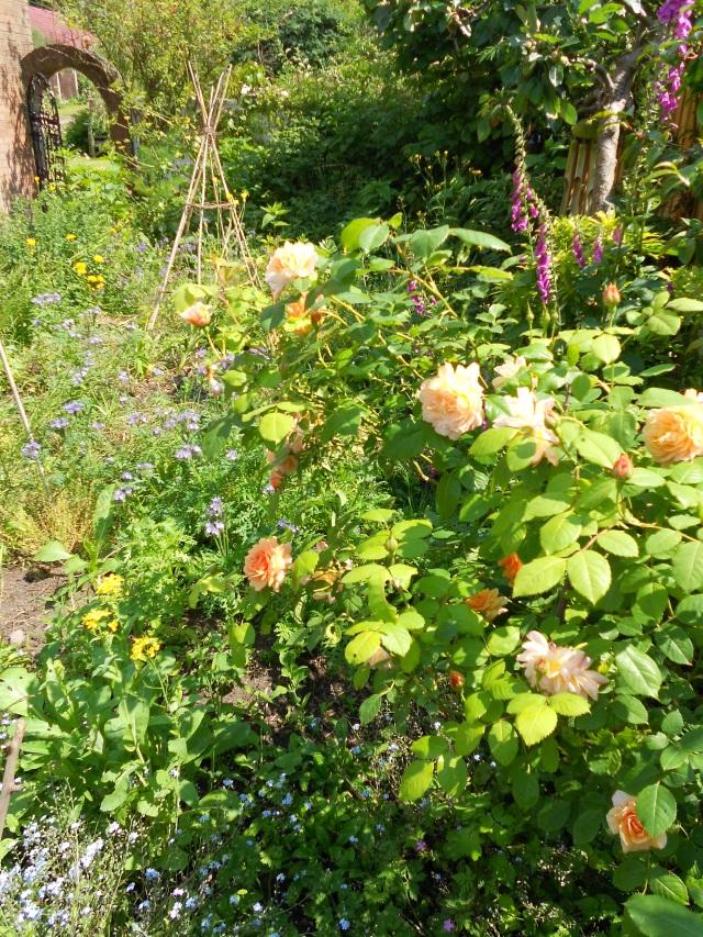DSCN5174 flowery edge July 2013