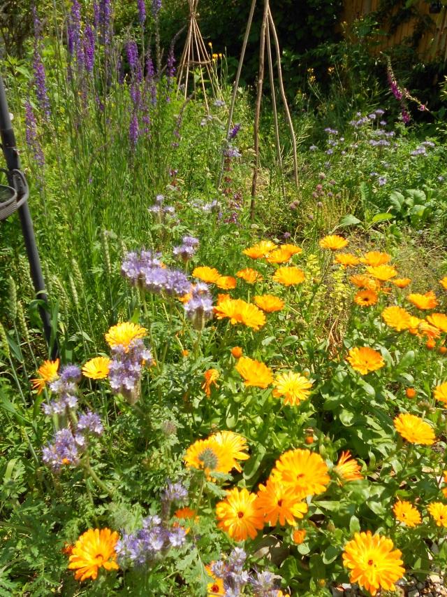 DSCN5175 more flowers july 2013