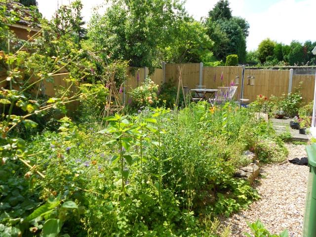 DSCN5183 back garden july 2013