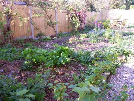 DSCN6148 side garden 16 April 2014
