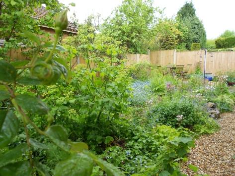 DSCN6228 side garden 12 May 2014