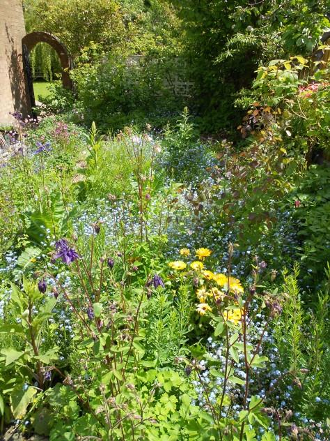DSCN6258 garden in sun May 2014