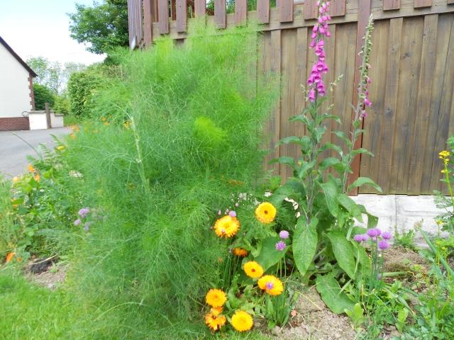 DSCN6312 garden edge