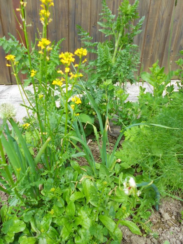 DSCN6313 garden edge