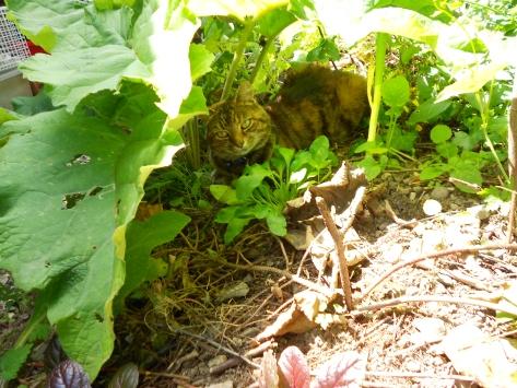 DSCN6531 fleur under burdock