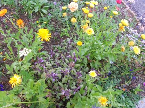 DSCN6532 flower bed