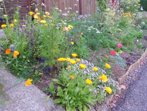 DSCN6540 flower bed