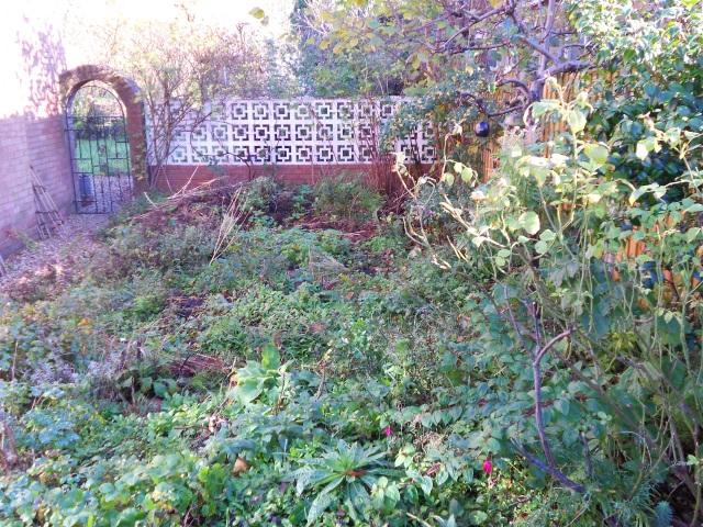 DSCN6858 back garden