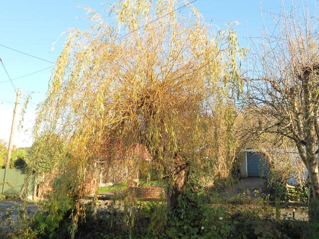 DSCN6877 willow all
