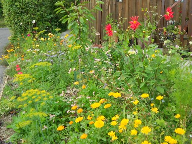 DSCN6559 flowers aug 14