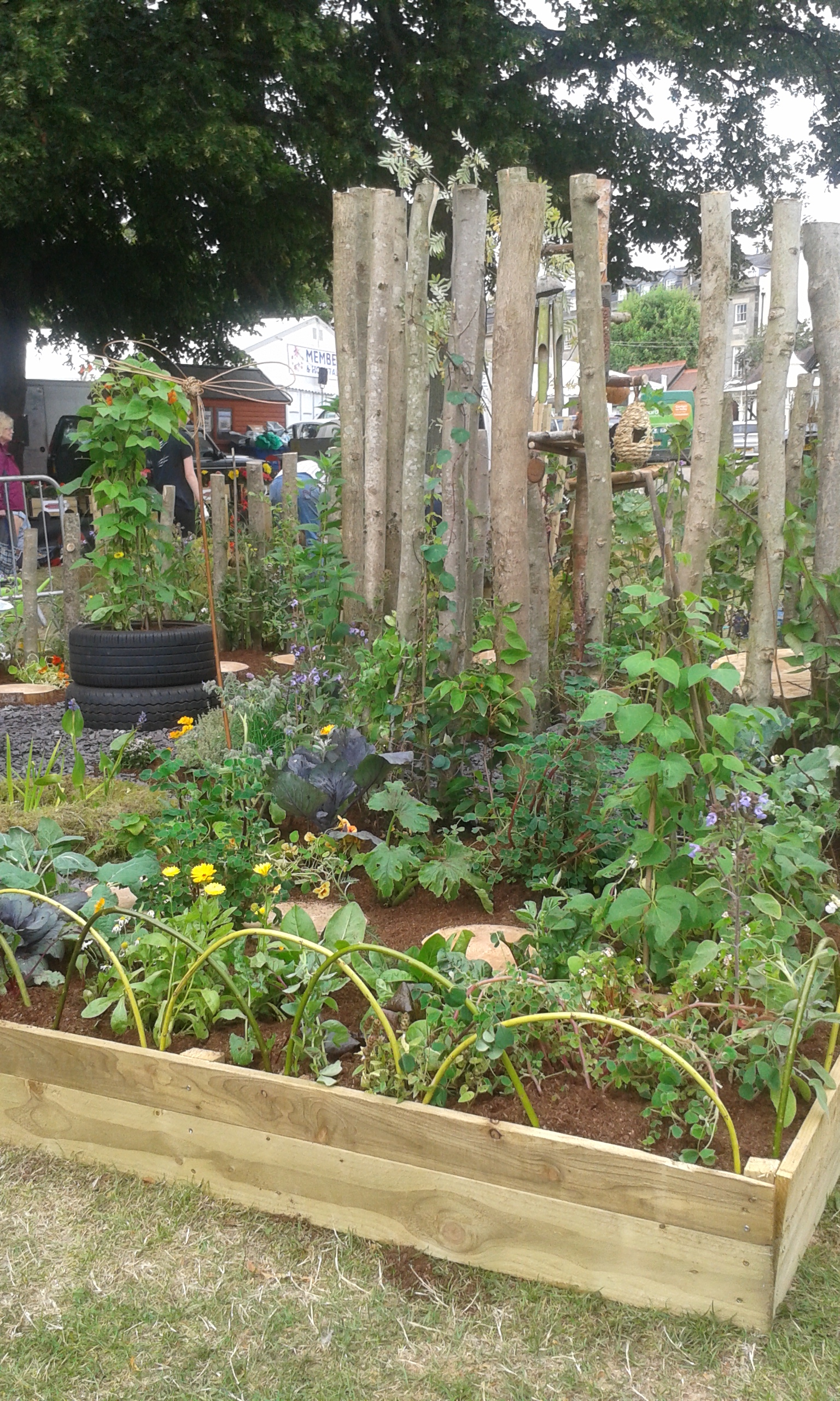 gold medal for permaculture working with nature garden anni u0027s