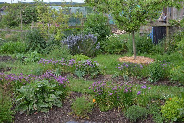 Perennial veg garden 1