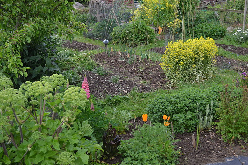 Perennial Veg Garden 2
