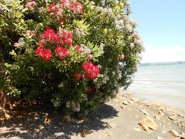 DSCN7184 p ... tree at picnic beach